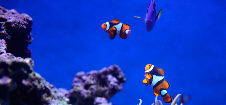 Noticia del Blog sobre peces y animales